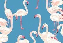 Flamingos FTW