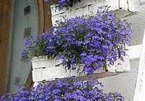 dekoracje ogrodu