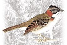 Ptáci - kresba