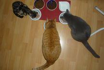 Moje kočky - už i s Easy / Do rodiny přišla princezná Easy