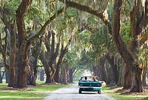 ~Places and things to see and do in South Carolina~ / by Amelia Stunkel