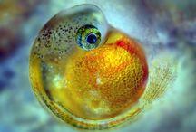 Aquariums - Guppy