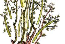 Řez stromů a keřů