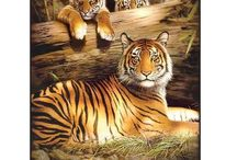 Tigers / The tiger is the biggest species of the cat family. A group of tigers is called an 'ambush' or 'streak'.