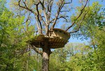 Tree Houses / by Courtnay Vasser