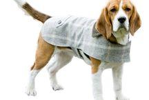 Coats for Bucky !!
