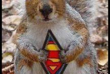 Écureuil Superman