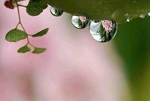 Rain Drops :)