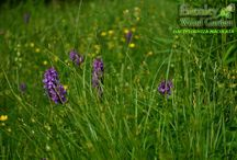 Wildlife flowers / Discover names of common flowers which may even grow in your surroundings.