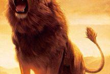 Löwen - Lions