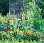 i love gardening / by Beth Wright