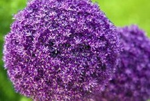 Garden and Flowers / Flowers, blooms, trees, shrubs - all about the garden
