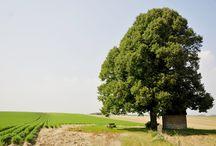 Haspenhoeve / De Haspenhoeve, een uiterst verzorgde en comfortabele 4 sterren B&B, is gelegen in de kleinste zelfstandige gemeente van België: Herstappe. Dit pareltje van Haspengouw pronkt in een oase van rust, midden in de natuur en vlakbij het fiets- en wandelroutenetwerk Limburg.