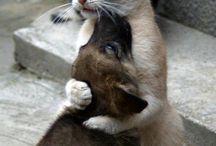 Love animals  / Animali