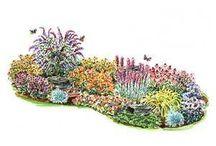 garden - butterfly garden - Herbs