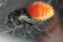 bugs / by Martha Sue