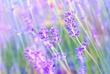 Botanical, Birds, Nature, Gardens... / by Barbie Ambit Energy & Arbonne