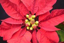 Felices Fiestas / Platillos e Ideas de como celebrar Navidad en familia
