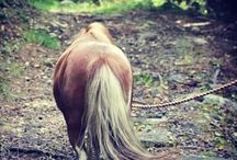 my equestrian Instagram