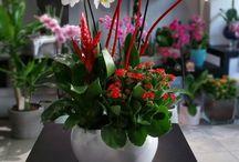 Συνθέσεις Φυτών - Παράδοση Αυθημερόν