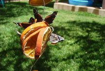 Butterfly houses