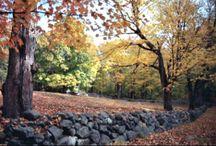 Connecticut Seasons / by Naomi Nieser-Allen