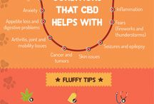 Hemp CBD for Dogs / CBD for dogs can benefit your pet with many health issues. It's derived from industrial hemp (not marijuana with THC) and can help your dog with inflammation, pain, anxiety, seizures, and improve their overall wellbeing.