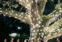 Trees & lighting