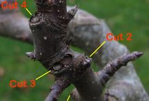 All about apple trees / Growing and know how