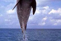 Życie morskie