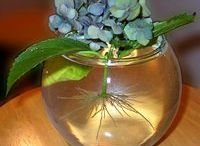The little garden / Flowers, decorating ideas,