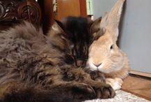 koty i króliki
