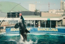 Orca Ulises (I whant to see you again!) / Amor a primera vista de este pequeño en Barcelona