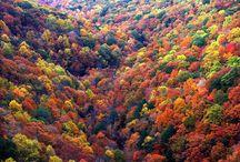 Ősz / Fall