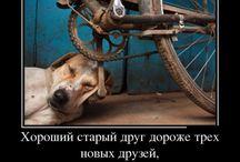ДЕМОТИВАТОРЫ )))