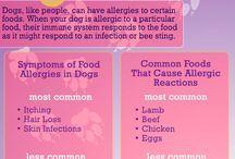 Dog Life ~ Sickness