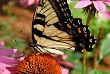Outdoors: Butterfly Garden / Butterfly garden ideas, plants, layouts / by Julia Quintero