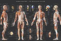 Anatomy Nerds