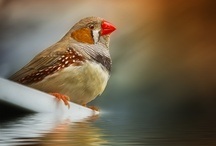 I love birds! / by Amy Hagerup