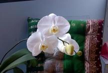 Orchids / by sabina binka