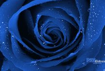 Blue is blue is Blue
