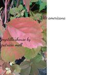 In campagna / All'aperto, piante, panorami, stagioni che passano