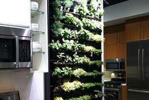 My kitchen wall