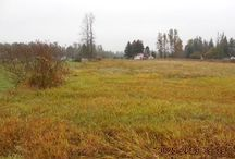 Land For Sale / by Washington Realty Group