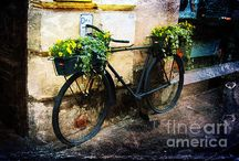 Photography - Still Life for Sale