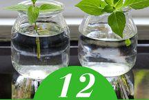 planter legumes