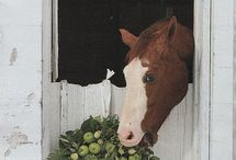 Horses / by Cindy Sherrill