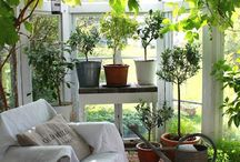 Green house in house
