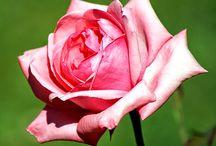 Çiçek-Böcek