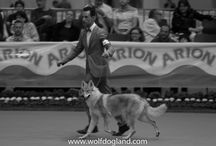 Exposición de Primavera (IFEMA, Madrid) 2015 con Cassiopea Infinity Love Wolfdog Land